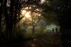 Evening on hampstead heath