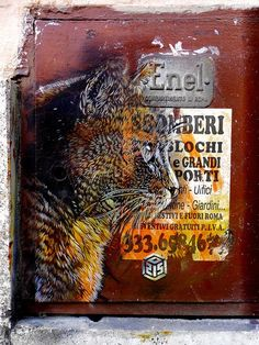 Amazing French street artist Christian Guémy aka C215 in Rome