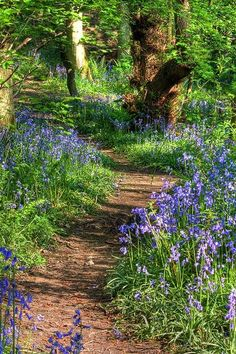 Ideas for a woodland garden & path. You will never truly experience the world until you create your own path. I think I will choose a path filled with flowers. Beautiful Landscapes, Beautiful Gardens, Woodland Garden, Woodland Flowers, Forest Flowers, Meadow Garden, Forest Garden, Walk In The Woods, Cottage In The Woods