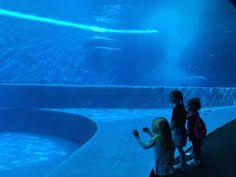 Perchè visitare l'Acquario di Genova e vivere tante emozioni - http://www.chizzocute.it/perche-visitare-acquario-di-genova/