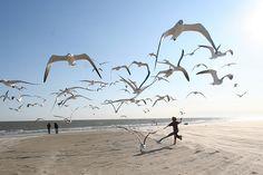 """running with the seagulls"" ~ Galveston,Texas • by Ed Schipul (eschipu) via Flickr"