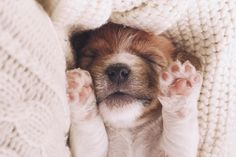 It's time to watch some sweet dreams - Cute puppy lying on his back on soft knitted sweater, seeing sweet dreams with paws up