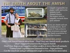 As much as I admire their faith and crafts, this is absolutely true. Amish and Mennonite puppy mills are rampant. For people of such faith, they really are awful with their animals.