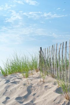 beach grass by Fresh New England, via Flickr