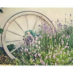 Home Decor, Art Print, Flowers Photography, European Wall Decor,... ($25) ❤ liked on Polyvore featuring home, home decor, wall art, flowers, purple flower wall art, purple home accessories, green wall art, rustic wall art and photographic wall art