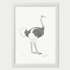 1000 Ideas About Ostriches On Pinterest Emu Animals
