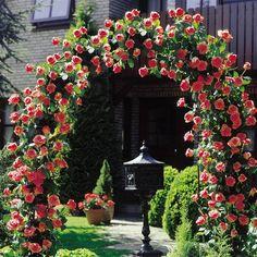 paul ricault rose | Ladang Kecil Bercocok tanam dengan pengetahuan