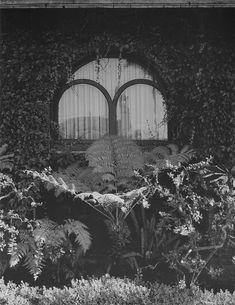 Paradise Backyard: Irving J. Gill