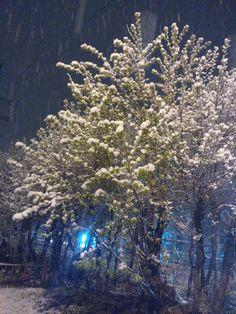 Снег весной www.qfine.ru