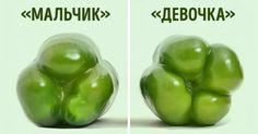 Перед покупкой болгарского перца обратите внимание на количество камер на дне. Перец, у которого 3 камеры, слаще, его можно употреблять в чистом виде, а тот, у которого 4, — более упругий и горьковатый, он идеален для приготовления разных блюд.