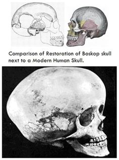 Boskop (Africa) skulls may indicate that ancient life forms were far more advanced than humans, because of larger brain capacity.