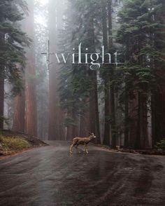 Alice Twilight, Twilight Jokes, Twilight Saga Books, Twilight Cast, Twilight Pictures, Twilight Movie, Series Movies, Film Movie, Flightless Bird