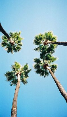 Look up! @thecoveteur