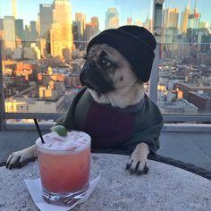 Doug The #pug (@itsdougthepug) | Twitter