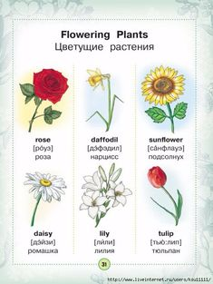 Learn Russian, Learn German, Learn English, Visual Dictionary, Picture Dictionary, Russian Lessons, English Lessons, English Class, English Words