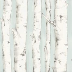Invite the effortless beauty of nature into your home with this stunning birch tree wallpaper. With a stunning light blue background and hand painted style, this forest wallpaper has a whimsical and enchanted feel. Pioneer is a pre pasted, easy walls Birch Tree Wallpaper, Plant Wallpaper, Forest Wallpaper, Wallpaper Roll, Nature Wallpaper, Birch Tree Mural, Summer Wallpaper, Nursery Wallpaper