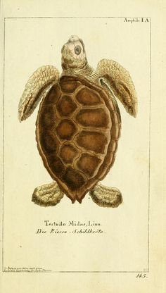 from Gemeinnüzzige Naturgeschichte des Thierreichs, 1783