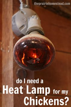 Are heat lamps safe in the chicken coop? How do I keep my chickens warm in the winter?