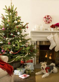 Beautiful Christmas room with adorable wire Fox Terrier by the fire. Christmas Interiors, Christmas Room, Merry Little Christmas, Noel Christmas, Christmas Design, All Things Christmas, White Christmas, Christmas Puppy, Christmas Fireplace