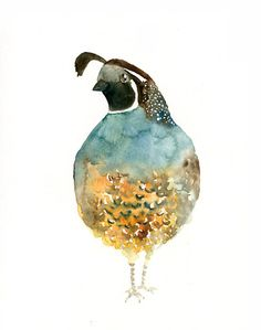 CALIFORNIA QUAIL Original watercolor painting by dimdi on Etsy, $25.00