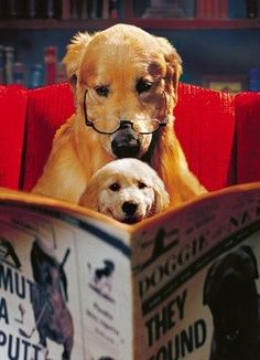 """It says, enroll your dog in Obedience Training. Actually son, the classes might be more for the humans. What do  you think?"" ""Ruff! Ruff!"""