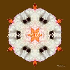 Mandala ''Blume weiß''  kreativesbypetra  #mandala #mandalas #mandalaart #mandalastyle #inspiration #innereruhe #spirit #blume #weiss #flower #flowers #white Mandala Art, Petra, Christmas Bulbs, Inspiration, Holiday Decor, Spirit, Flowers, Home Decor, Mandalas