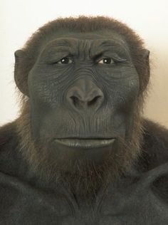 Paranthropus boisei or Australopithecus boisei was an early hominin, described as the largest of the Paranthropus genus. It lived in Eastern Africa during the Pleistocene epoch from about 2.3 until about 1.2 million years ago.