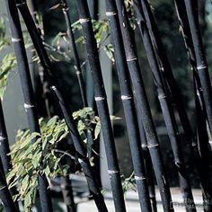 Die 106 Besten Bilder Von Bambus In 2019 Plants Bamboo Und Bamboo