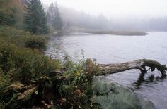 bridgewater triangle - Google Search