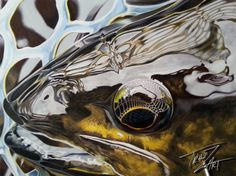"""Ghost "" Colored pencil drawing of a Brown Trout by Travis J.Sylvester. Reference photo courtesy of ""Gina Diephuis"""