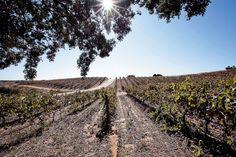 Onze noções básicas para falar de vinho português sem medo