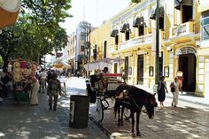 Merida, Yucatan Penisula, Mexico.  Wonderful, wonderful!