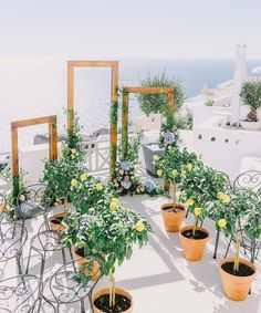 Mediterranean wedding prettiness 🍋 💙 That lemon tree aisle 💛 In a couple of weeks we officially kick off the 2019 wedding season and I…