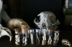 Animal bones and skulls