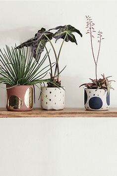 Love these pots for succulents- Glowing Arbor Pot #anthropologie