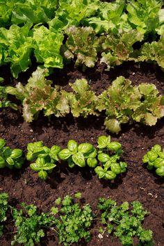 5 Secrets to Success for the Beginner Vegetable Gardener