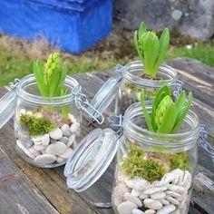 Les jacinthes font partie de ces si belles fleurs du printemps, faites les pousser dans des bocaux, en ajoutant quelques galets, et de l'humus pour les aider à grandir.