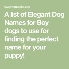 A list of Sporty Dog Names for Boy dogs to use for finding the perfect name for your puppy! Cool Dog Names Boys, Tough Dog Names, Funny Dog Names, Cute Names For Dogs, Boy Dog Names, Female Dog Names, Puppy Names, Dogs Names List, French Bulldog Names