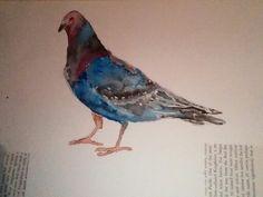 Watercolour pigion