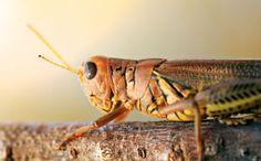 Locust Plagues Are Chewing Madagascar Toward Famine