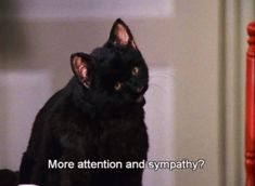 Pin for Later: 39 Salem Saberhagen Quotes You Should Start Using Immediately When Someone Asks If You Need Anything Cat Quotes, Film Quotes, Sabrina Cat, Salem Cat, Salem Saberhagen, Non Plus Ultra, Sabrina Spellman, My Spirit Animal, Cat Gif