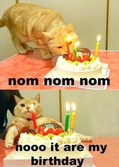 Funny Happy Birthday Meme for Mom, Sister, Guys or Husbands. Different and unique happy birthday meme's are about dogs, cats, girl's and men. Cat Birthday Memes, Birthday Cake For Cat, Funny Birthday Cakes, Birthday Kitty, Art Birthday, Birthday Quotes, Birthday Wishes Messages, Birthday Wishes Funny, I Love Cats