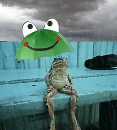frog sitting on a dock, in the rain holding a frog umbrella.  it's a GIF file.  :)