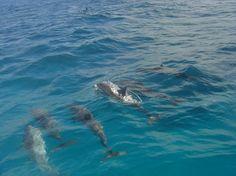 Dolphins - Fernando de Noronha - Brazil
