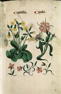 Tudor Herbal,1520 - Retronaut