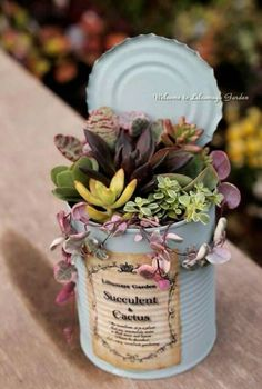 23 types of succulents & care for beginners – MD Home DIY Ideas – Diy … - garden types Types Of Succulents, Succulents In Containers, Cacti And Succulents, Planting Succulents, Cactus Plants, Succulents Wallpaper, Small Succulent Plants, Succulents Drawing, Vertical Succulent Gardens
