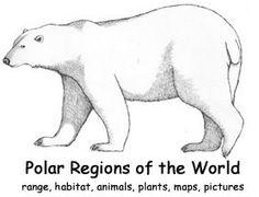 Polar Bear Color Page - Bing images Polar Bear Coloring Page, Bear Coloring Pages, Polar Bears Live, Penguins And Polar Bears, Animal Sketches, Animal Drawings, Polar Bear Outline, Bear Sketch, Art Classroom Management