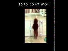 PERRITO CON RITMO