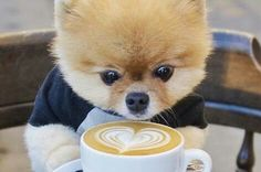 Puppy want to dring coffee <3