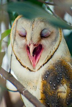 Night, night!   Sleepy Owl